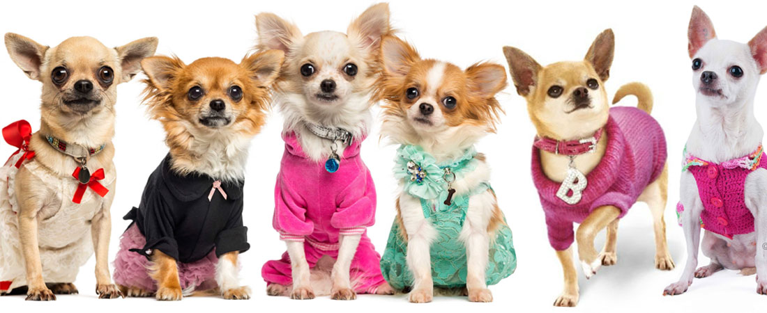 7-CHIHUAHUA-DOG-THEME-PARTY-IDEAS
